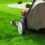 How To Keep Your Lawn Looking Its Best