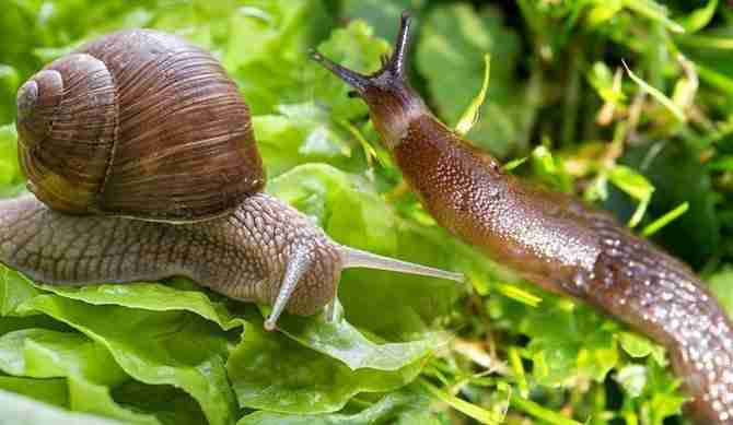 How To Keep Slugs and Snails Out Of Your Garden