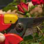 The Best Secateurs for Small Hands