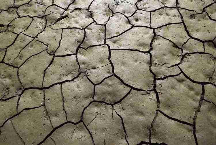 best tiller for clay soil