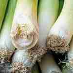 how to grow leeks from seed to harvest