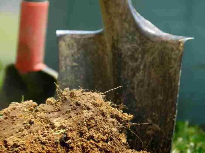 tilling soil in the garden
