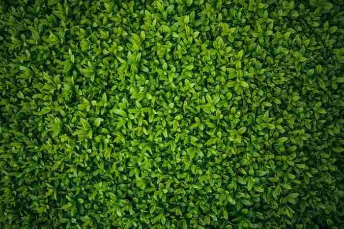 green beautiful hedges
