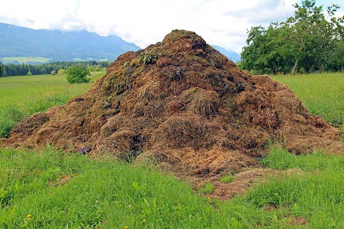 dung compost heap