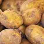 potato new crop