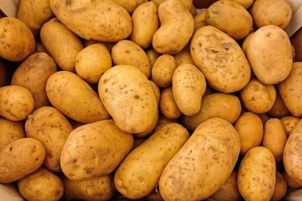 Maris piper potatoes - great for making french fries