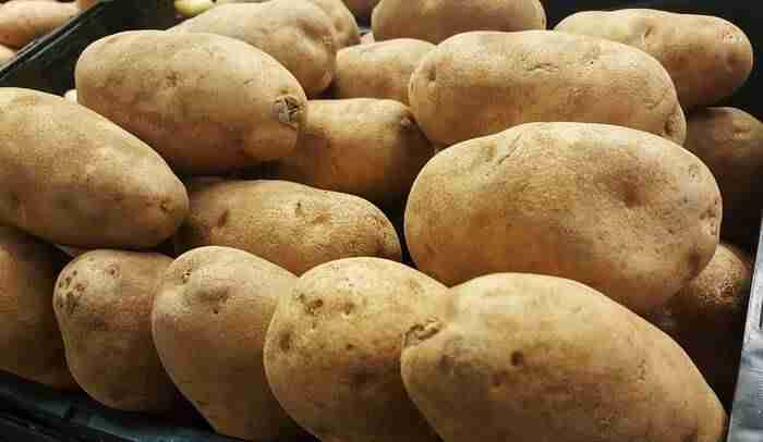 Russet Burbank is the best potato for french fries