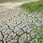 very dry land, soil with crops growing badly on it