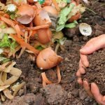 compost heap with vegetable peeling eggshells and tea bags