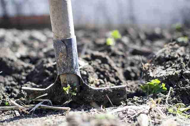 a gardener digging soil in his vegetable garden with a spade