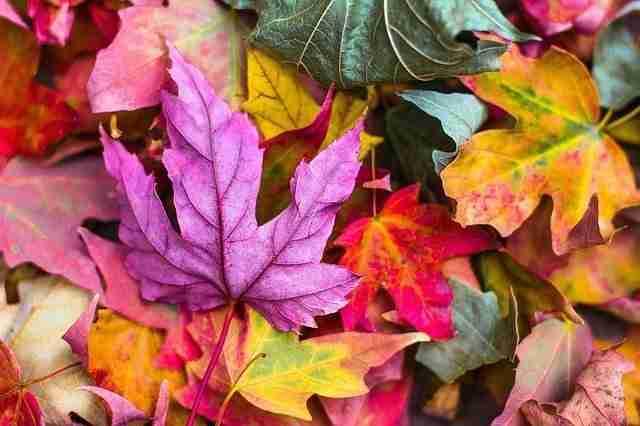 Vibrant colours of autumn leaves
