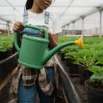 woman with watering can in a greenhouse lowering soil ph with vinegar solution