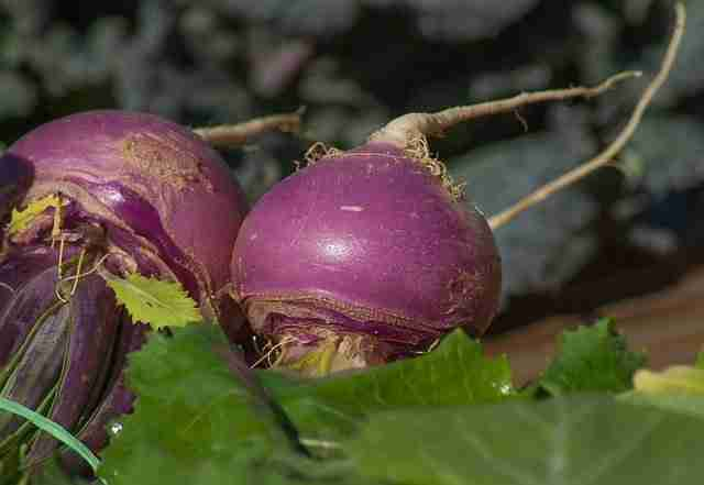 a bunch of purple topped turnips