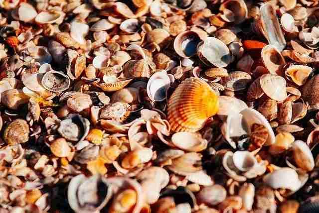 seashells on a beach shore