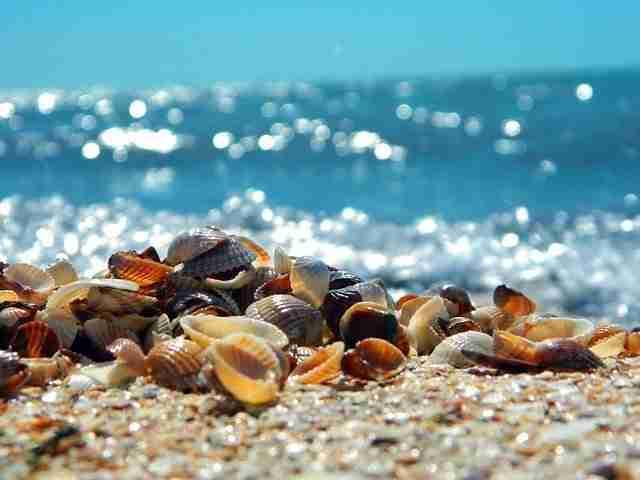 sea shells in garden soil