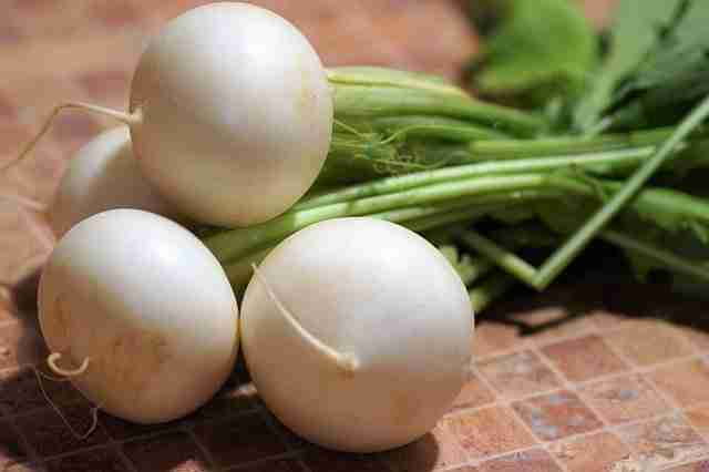 white turnips with a smooth skin