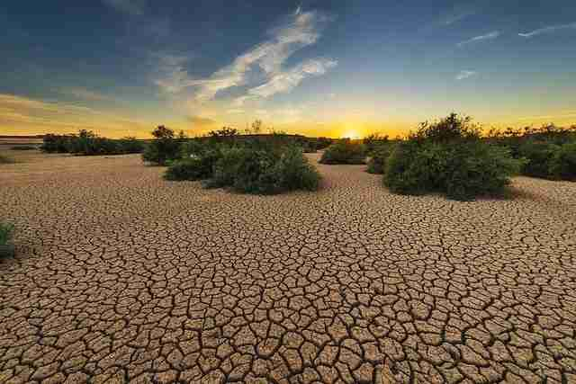 Very dry soil drought plants not growing