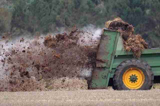 tractor and manure spreader applying manure onto crops