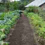 vegetables growing very well, not growing slowly