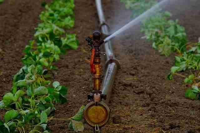 water irrigating crops grown in soil