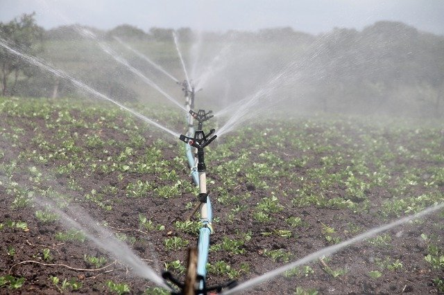 water irrigating crops in a field