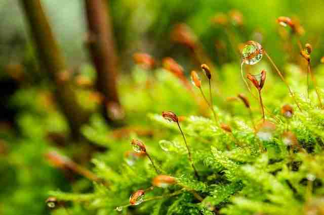 sphagnum moss holding water droplets