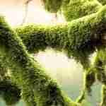 sphagum moss on tree branches