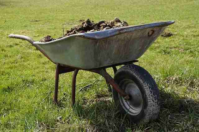 horse and cow dung manure in a wheelbarrow