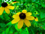 Drought Tolerant Perennials That Bloom All Summer