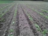 How Can I Make My Soil More Fertile