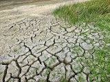 How To Improve Water Retention In Soil
