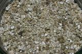 Perlite Or Vermiculite For Vegetables