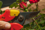 Best Secateurs for Small Hands