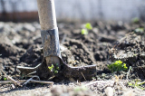 What Are Soil Microbes: an introduction