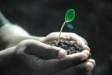 How Do Soil Microbes Affect Nutrients?