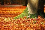 Is Leaf Compost Good For Vegetable Gardens?