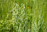 Cover Crops For Gardens: what are they and how do I choose one?