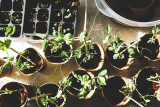 Can I Reuse Old Potting Soil (And How To Do It)?
