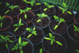 Is There A Difference Between Potting Soil And Topsoil?