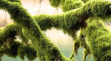 How To Grow Sphagnum Moss: what it is, growing your own, types and uses