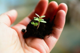 How To Sterilize Soil: how to make your own